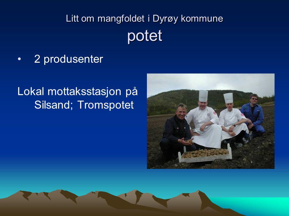 Litt om mangfoldet i Dyrøy kommune potet 2 produsenter Lokal mottaksstasjon på Silsand; Tromspotet