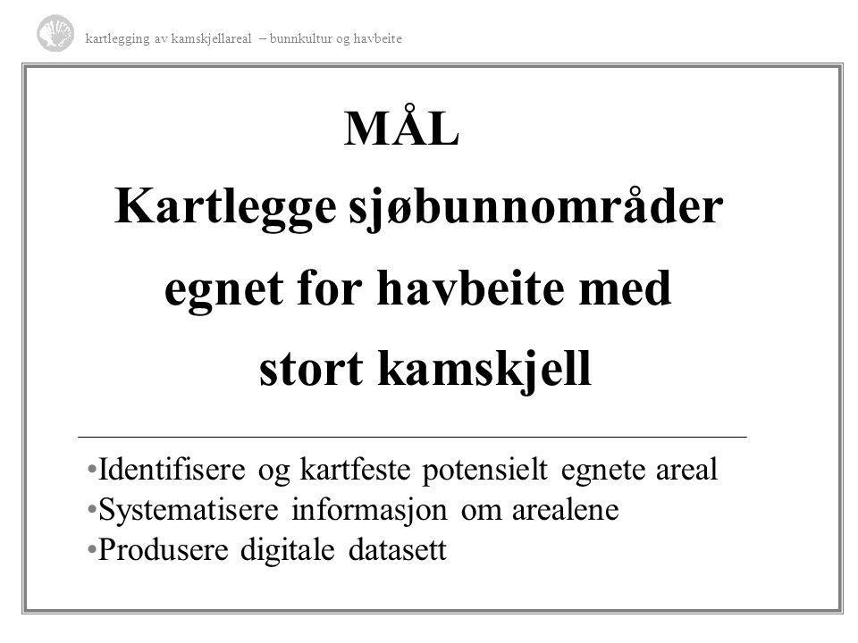 MÅL Kartlegge sjøbunnområder egnet for havbeite med stort kamskjell kartlegging av kamskjellareal – bunnkultur og havbeite Identifisere og kartfeste p
