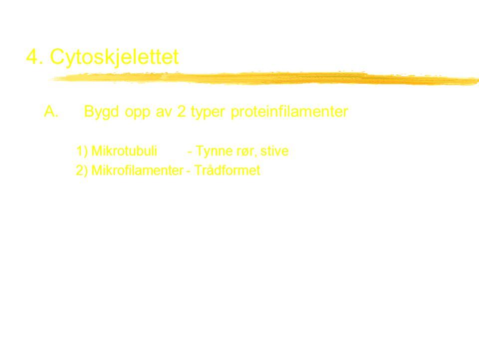 4. Cytoskjelettet A. Bygd opp av 2 typer proteinfilamenter 1) Mikrotubuli- Tynne rør, stive 2) Mikrofilamenter - Trådformet