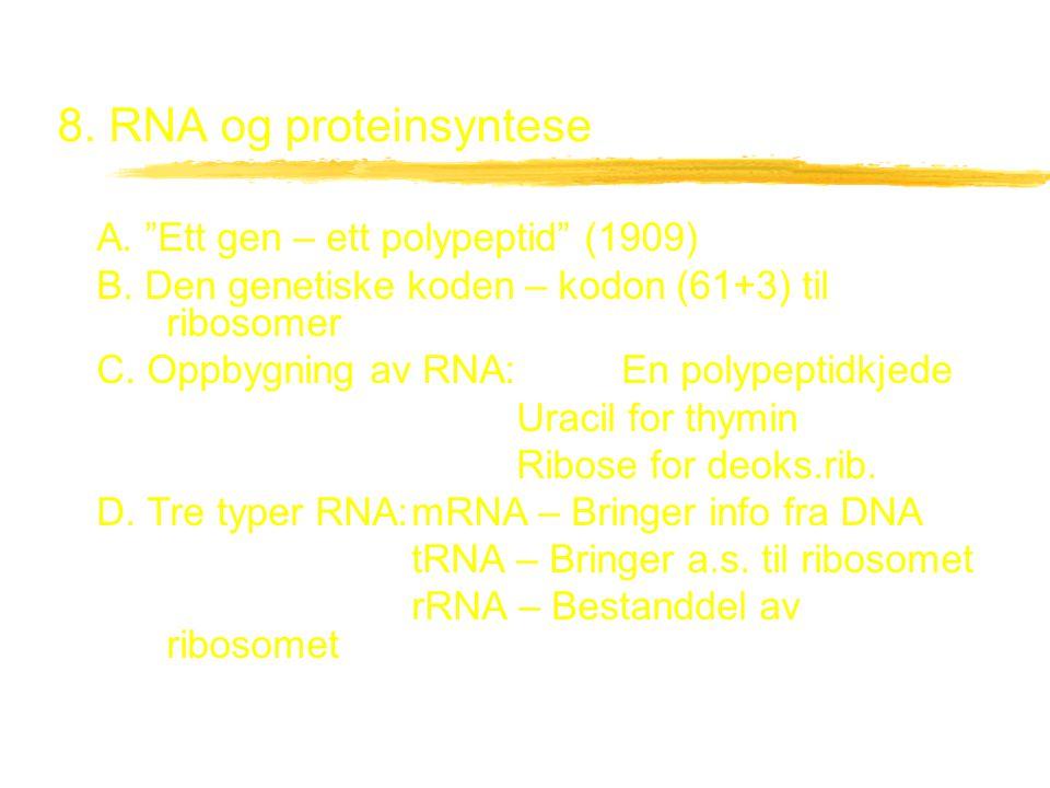 """8. RNA og proteinsyntese A. """"Ett gen – ett polypeptid"""" (1909) B. Den genetiske koden – kodon (61+3) til ribosomer C. Oppbygning av RNA:En polypeptidkj"""