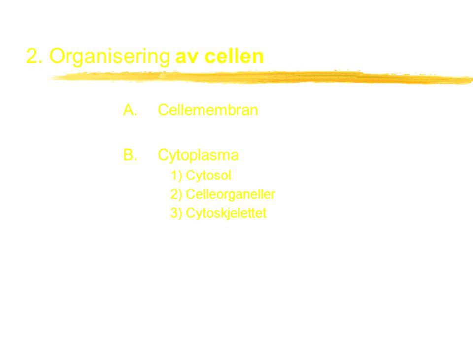 2. Organisering av cellen A. Cellemembran B. Cytoplasma 1) Cytosol 2) Celleorganeller 3) Cytoskjelettet