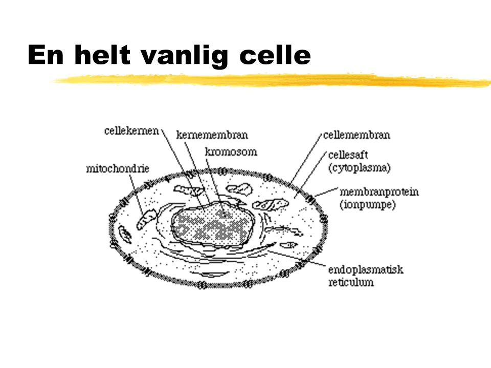 3.Celleorganellene A.