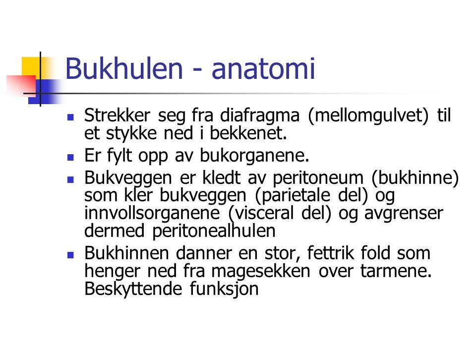Bukhulen - anatomi Strekker seg fra diafragma (mellomgulvet) til et stykke ned i bekkenet. Er fylt opp av bukorganene. Bukveggen er kledt av peritoneu