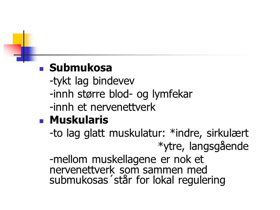 Submukosa -tykt lag bindevev -innh større blod- og lymfekar -innh et nervenettverk Muskularis -to lag glatt muskulatur: *indre, sirkulært *ytre, langs