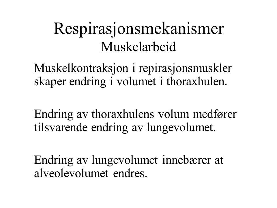 Respirasjonsmekanismer Muskelarbeid Muskelkontraksjon i repirasjonsmuskler skaper endring i volumet i thoraxhulen. Endring av thoraxhulens volum medfø