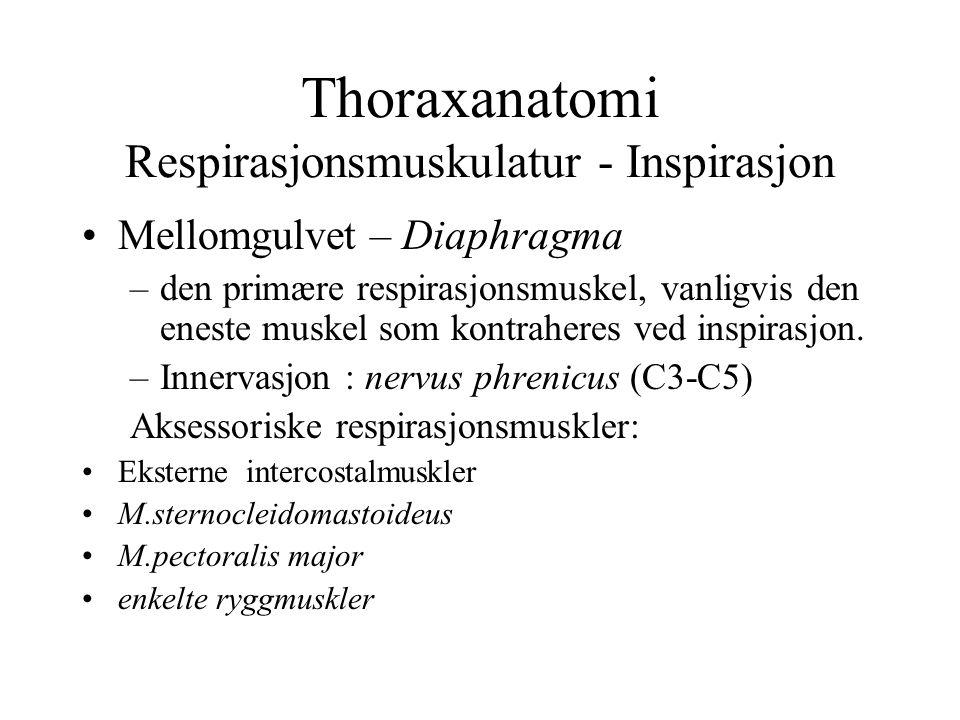 Thoraxanatomi Respirasjonsmuskulatur - Inspirasjon Mellomgulvet – Diaphragma –den primære respirasjonsmuskel, vanligvis den eneste muskel som kontrahe