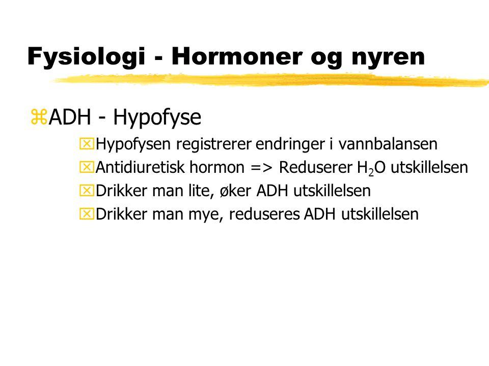 Fysiologi - Hormoner og nyren zADH - Hypofyse xHypofysen registrerer endringer i vannbalansen xAntidiuretisk hormon => Reduserer H 2 O utskillelsen xD