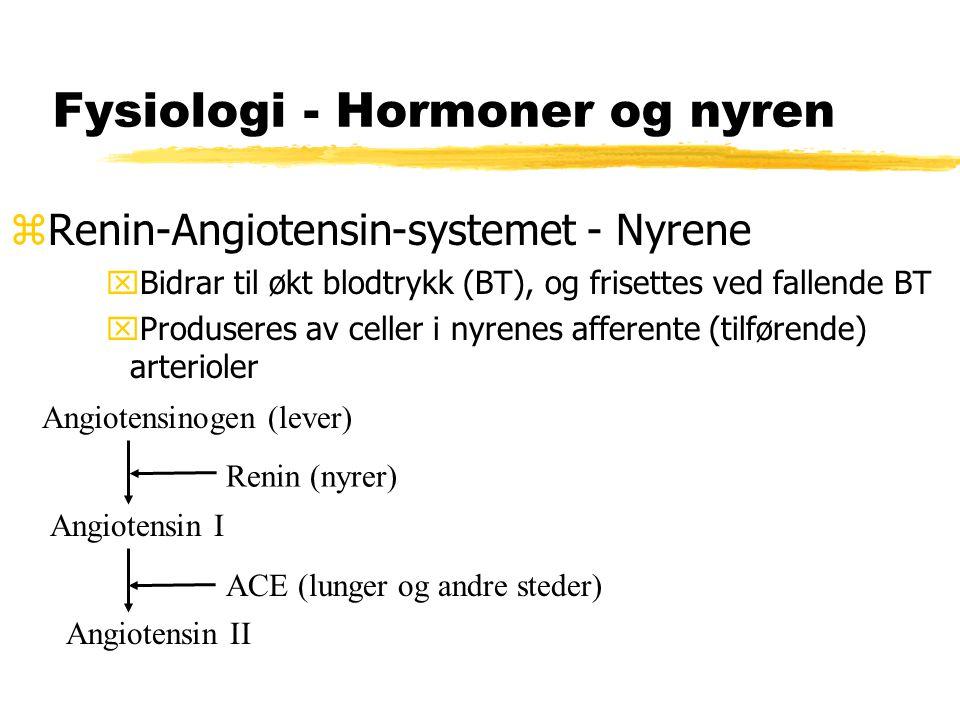 Fysiologi - Hormoner og nyren zRenin-Angiotensin-systemet - Nyrene xBidrar til økt blodtrykk (BT), og frisettes ved fallende BT xProduseres av celler