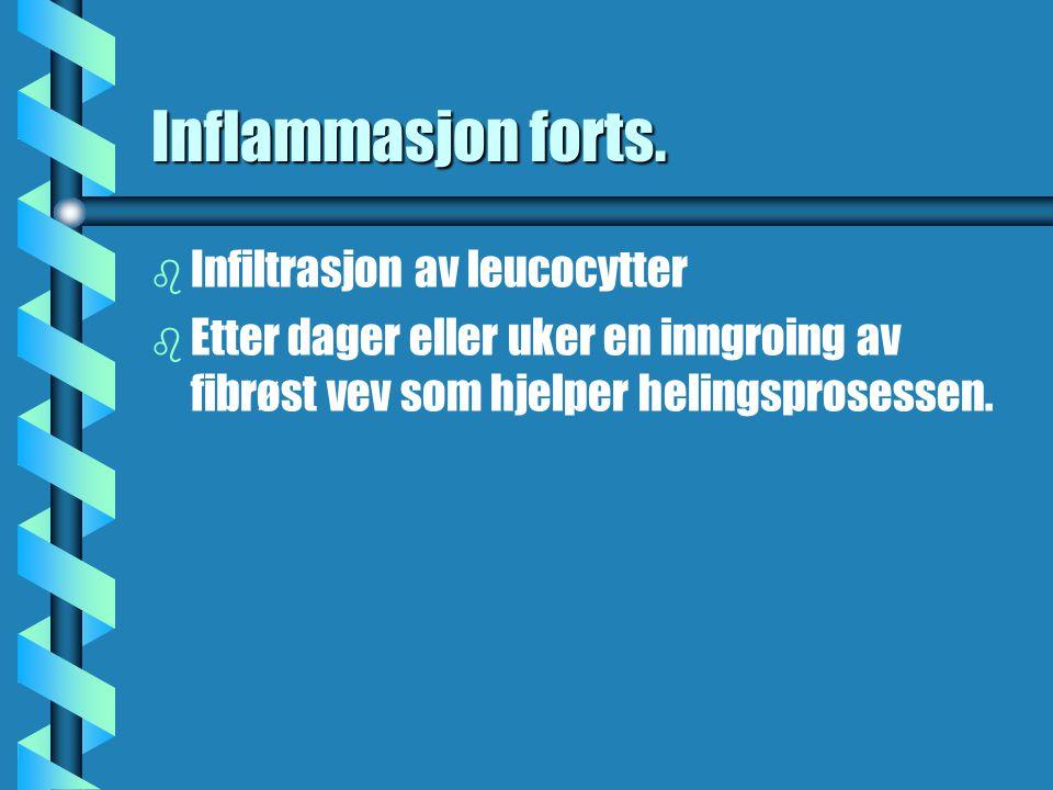 Inflammasjon forts. b b Infiltrasjon av leucocytter b b Etter dager eller uker en inngroing av fibrøst vev som hjelper helingsprosessen.