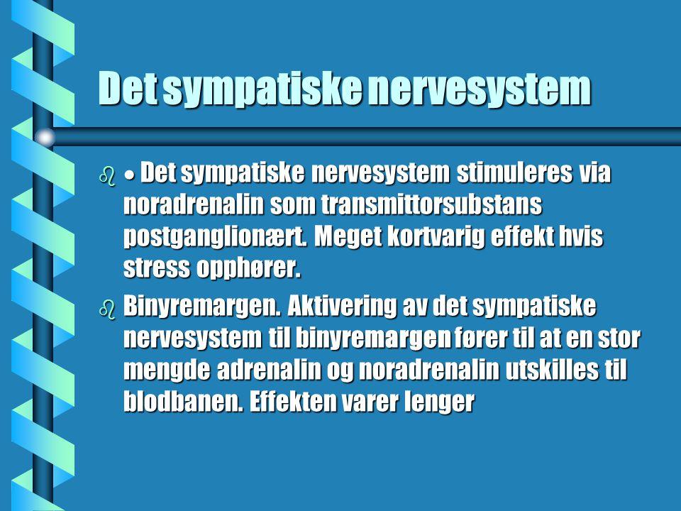 Det sympatiske nervesystem b  Det sympatiske nervesystem stimuleres via noradrenalin som transmittorsubstans postganglionært. Meget kortvarig effekt