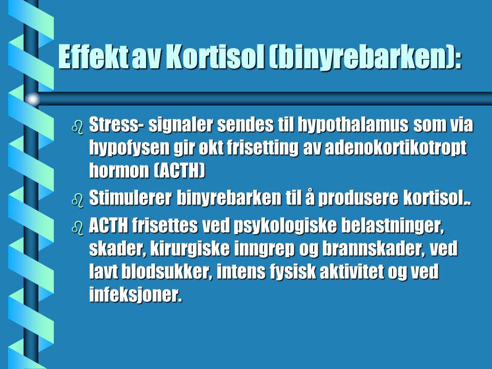Effekt av Kortisol (binyrebarken): b Stress- signaler sendes til hypothalamus som via hypofysen gir økt frisetting av adenokortikotropt hormon (ACTH) b Stimulerer binyrebarken til å produsere kortisol..