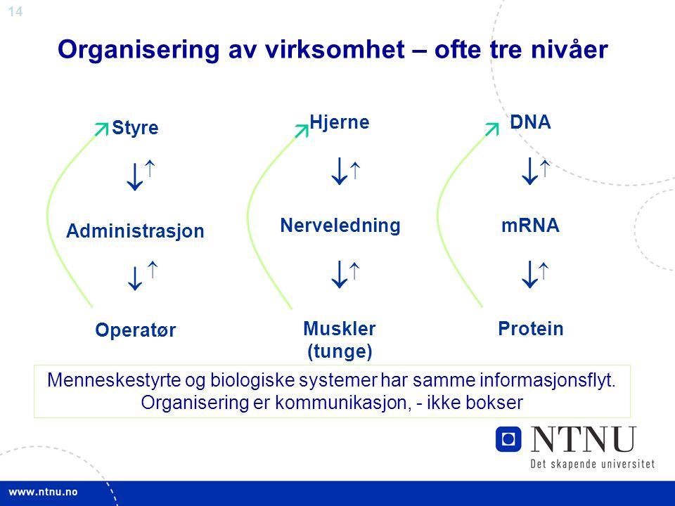 14 Organisering av virksomhet – ofte tre nivåer Styre  Administrasjon  Operatør    Hjerne  Nerveledning  Muskler (tunge)    DNA  mRNA  Pro