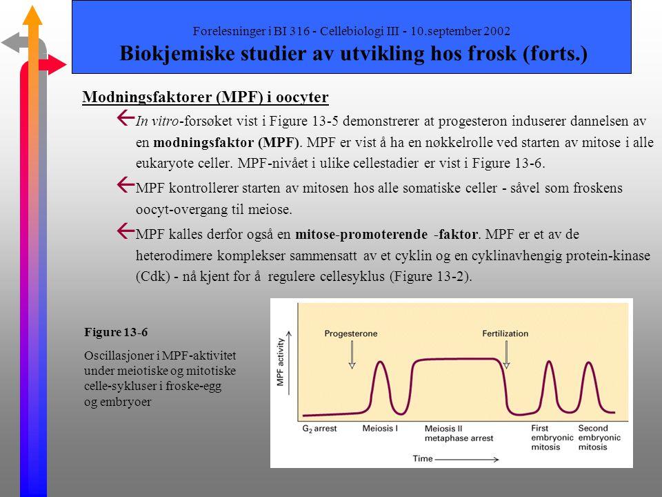 Forelesninger i BI 316 - Cellebiologi III - 10.september 2002 Biokjemiske studier av utvikling hos frosk Innledning ß Studier av oocyter dvs. eggcelle
