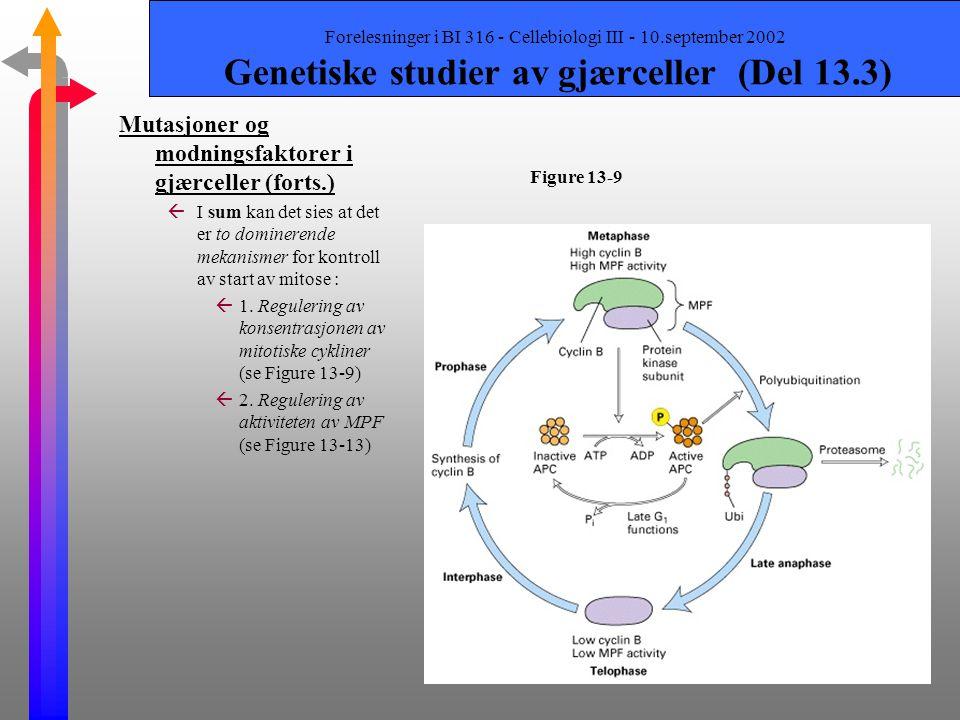 Forelesninger i BI 316 - Cellebiologi III - 10.september 2002 Genetiske studier av gjærceller (Del 13.3) Mutasjoner og modningsfaktorer i gjærceller (