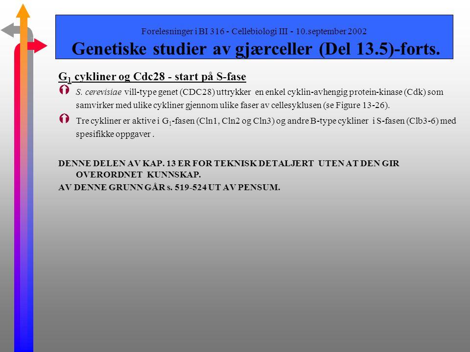 Forelesninger i BI 316 - Cellebiologi III - 10.september 2002 Genetiske studier av gjærceller (Del 13.5) Saccharomyces cerevisiae Cdc28 Ý Avgjørende f