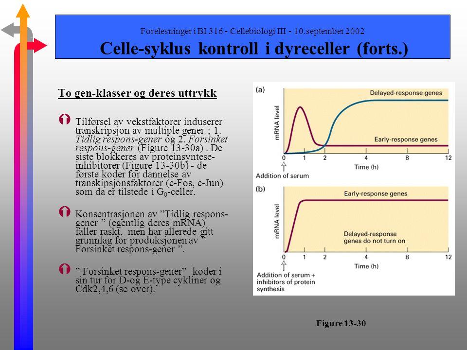 Forelesninger i BI 316 - Cellebiologi III - 10.september 2002 Celle-syklus kontroll i dyreceller (forts.) Multiple Cdk og cykliner regulerer dyrecelle