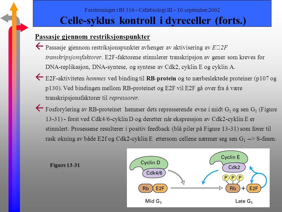 Forelesninger i BI 316 - Cellebiologi III - 10.september 2002 Celle-syklus kontroll i dyreceller (forts.) To gen-klasser og deres uttrykk Ý Tilførsel