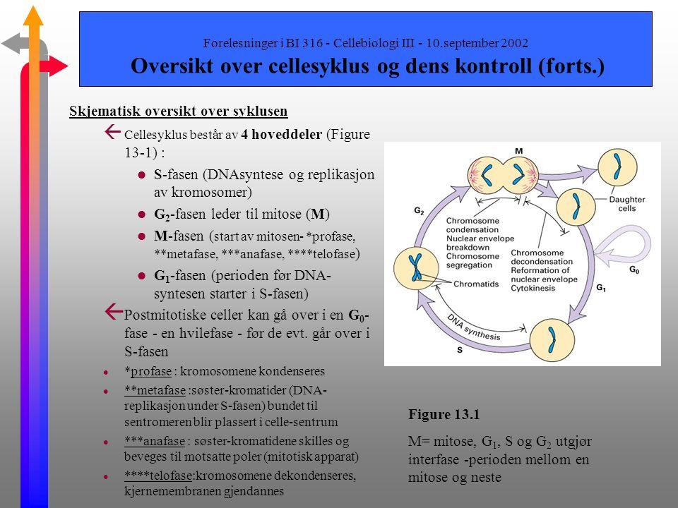 Forelesninger i BI 316 - Cellebiologi III - 10.september 2002 Oversikt over cellesyklus og dens kontroll (Del 13.1) Innledning ß Regulering av cellesy