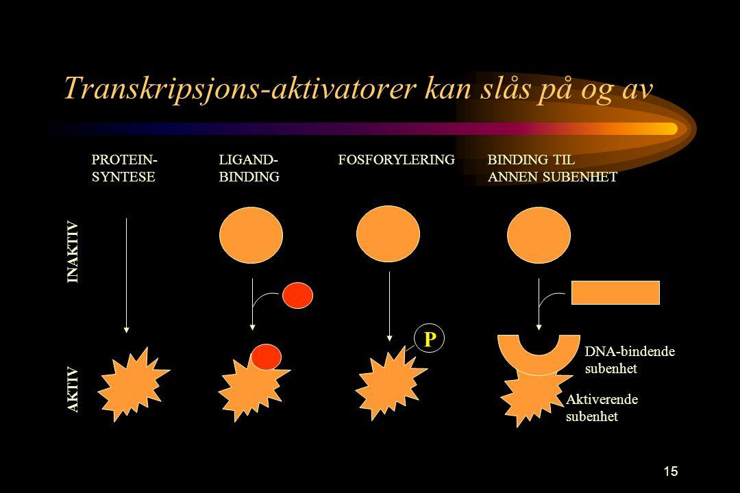 15 Transkripsjons-aktivatorer kan slås på og av P PROTEIN- SYNTESE LIGAND- BINDING FOSFORYLERINGBINDING TIL ANNEN SUBENHET AKTIV INAKTIV DNA-bindende subenhet Aktiverende subenhet