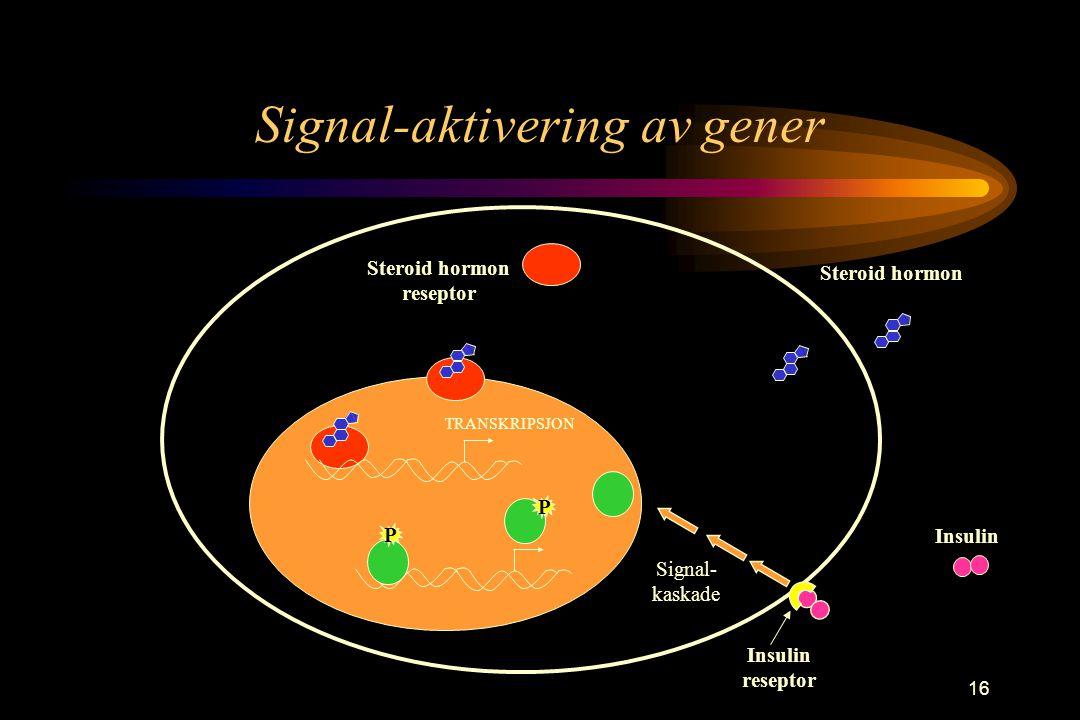 16 Signal-aktivering av gener Steroid hormon reseptor TRANSKRIPSJON Insulin Signal- kaskade P P Insulin reseptor