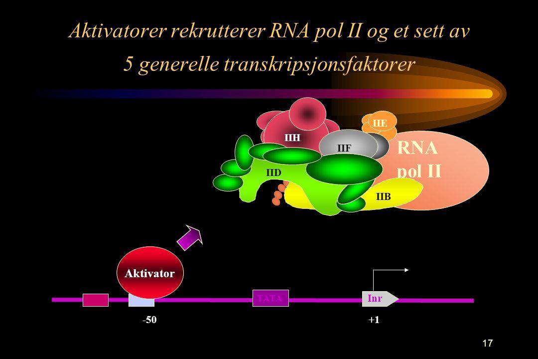 17 Aktivatorer rekrutterer RNA pol II og et sett av 5 generelle transkripsjonsfaktorer -50 Aktivator +1 TATA Inr RNA pol II IIF IIH IIE IIB IID