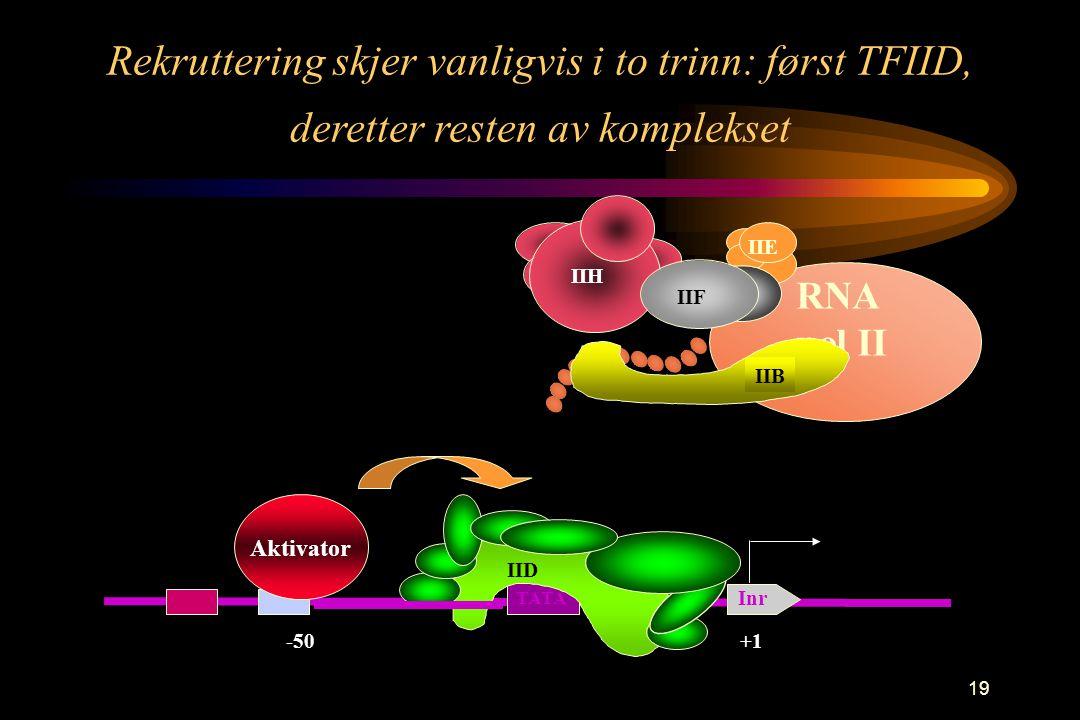 19 Rekruttering skjer vanligvis i to trinn: først TFIID, deretter resten av komplekset -50 Aktivator +1 TATA Inr RNA pol II IIF IIH IIE IIB IID