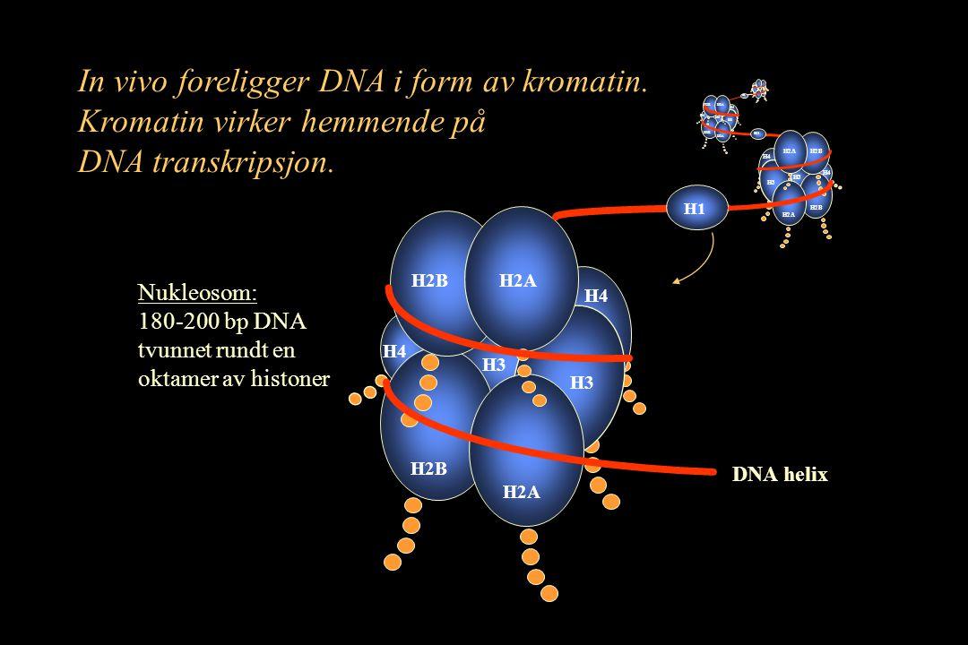 In vivo foreligger DNA i form av kromatin. Kromatin virker hemmende på DNA transkripsjon. Nukleosom: 180-200 bp DNA tvunnet rundt en oktamer av histon