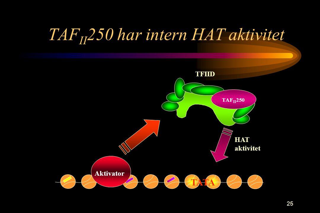 25 TAF II 250 har intern HAT aktivitet TAF II 250 TFIID TATA HAT aktivitet Aktivator