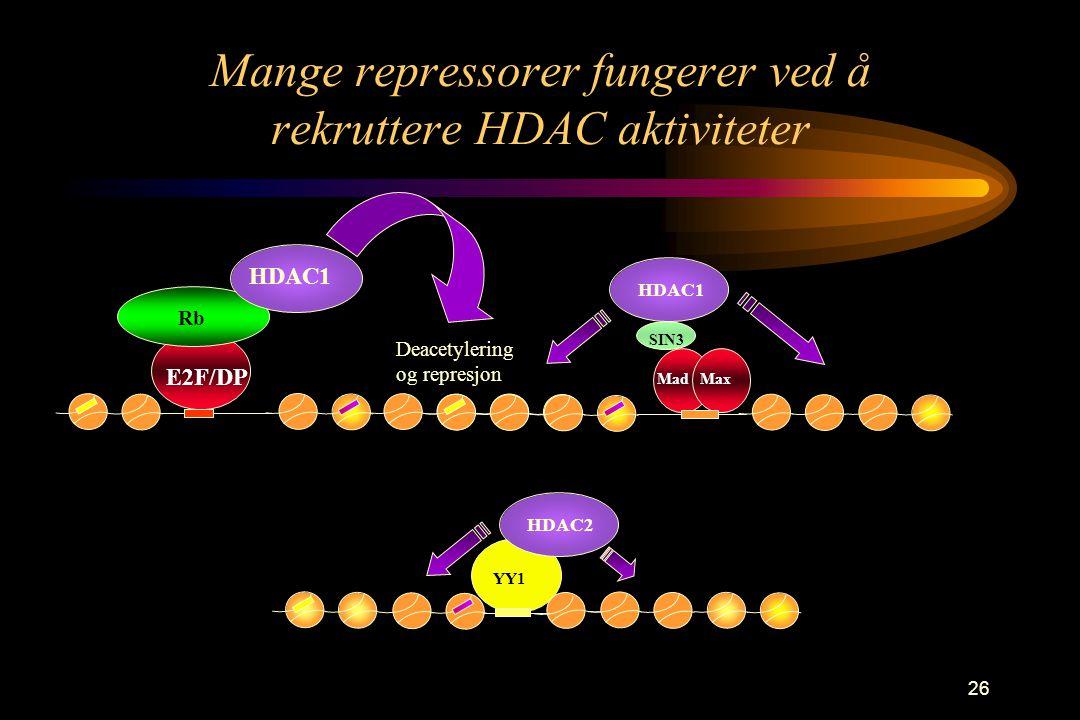 26 Mange repressorer fungerer ved å rekruttere HDAC aktiviteter E2F/DP Rb HDAC1 Deacetylering og represjon MadMax HDAC1 SIN3 YY1 HDAC2