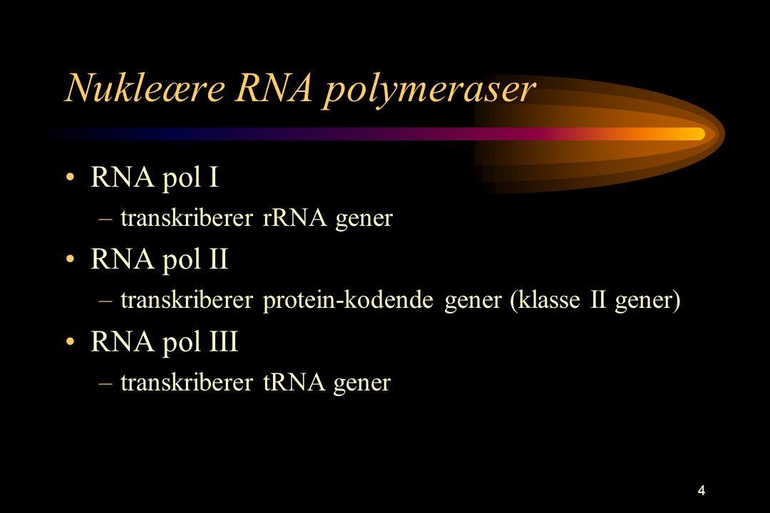 4 Nukleære RNA polymeraser RNA pol I –transkriberer rRNA gener RNA pol II –transkriberer protein-kodende gener (klasse II gener) RNA pol III –transkri