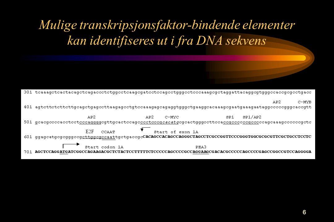 6 E2F Mulige transkripsjonsfaktor-bindende elementer kan identifiseres ut i fra DNA sekvens