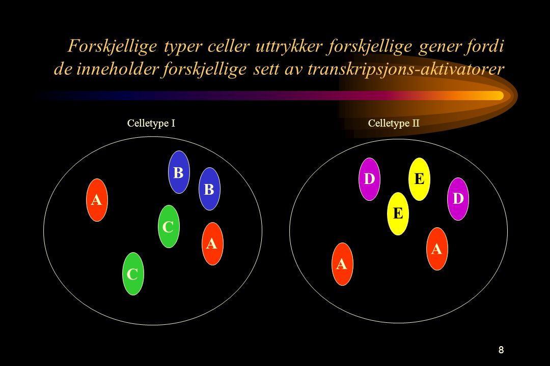 8 Forskjellige typer celler uttrykker forskjellige gener fordi de inneholder forskjellige sett av transkripsjons-aktivatorer A B DE BCC ADEAA Celletype I Celletype II