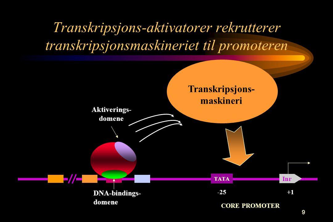 9 Transkripsjons-aktivatorer rekrutterer transkripsjonsmaskineriet til promoteren TATA Inr +1-25 CORE PROMOTER DNA-bindings- domene Aktiverings- domen
