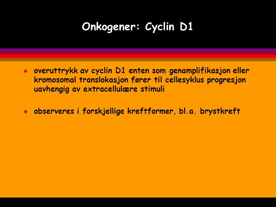 Onkogener: Cyclin D1 l overuttrykk av cyclin D1 enten som genamplifikasjon eller kromosomal translokasjon fører til cellesyklus progresjon uavhengig a
