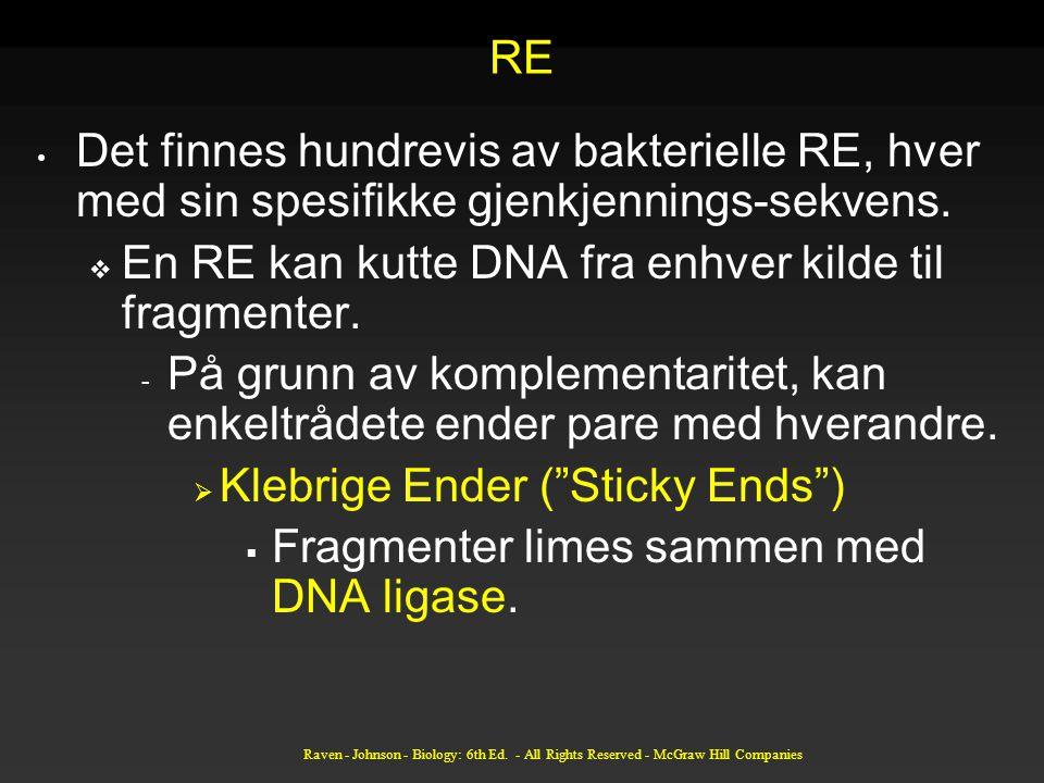 RE Det finnes hundrevis av bakterielle RE, hver med sin spesifikke gjenkjennings-sekvens.  En RE kan kutte DNA fra enhver kilde til fragmenter. - På