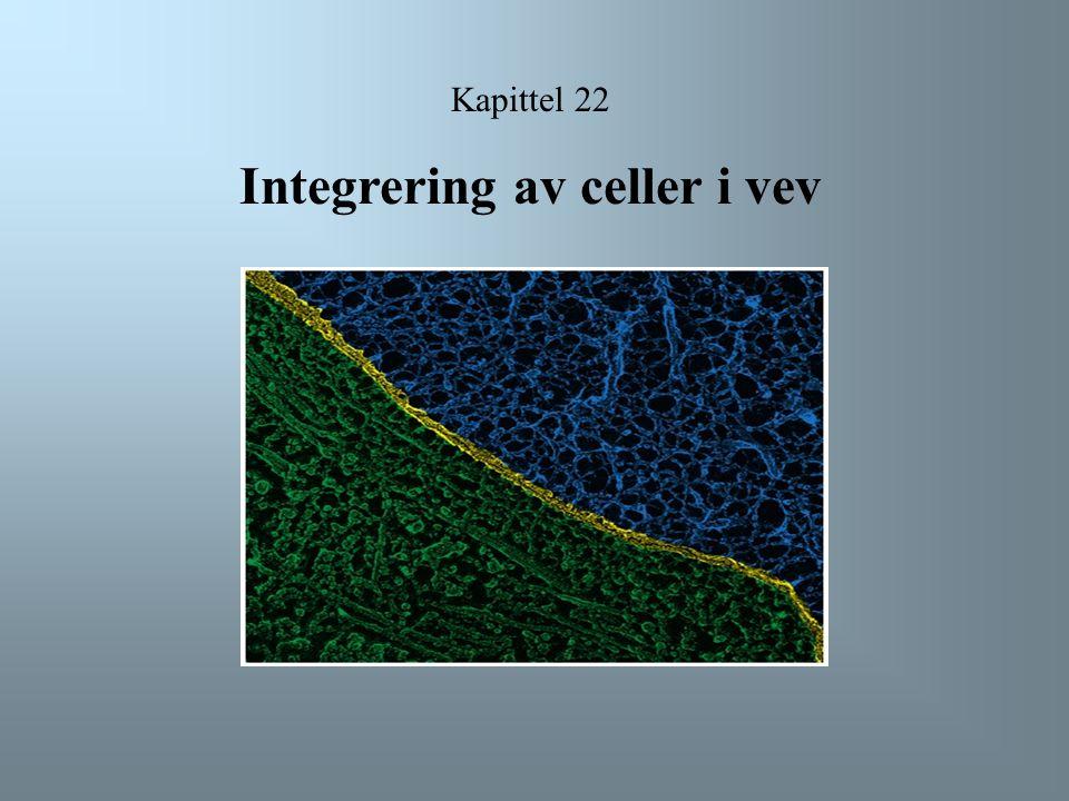 Kapittel 22 Integrering av celler i vev