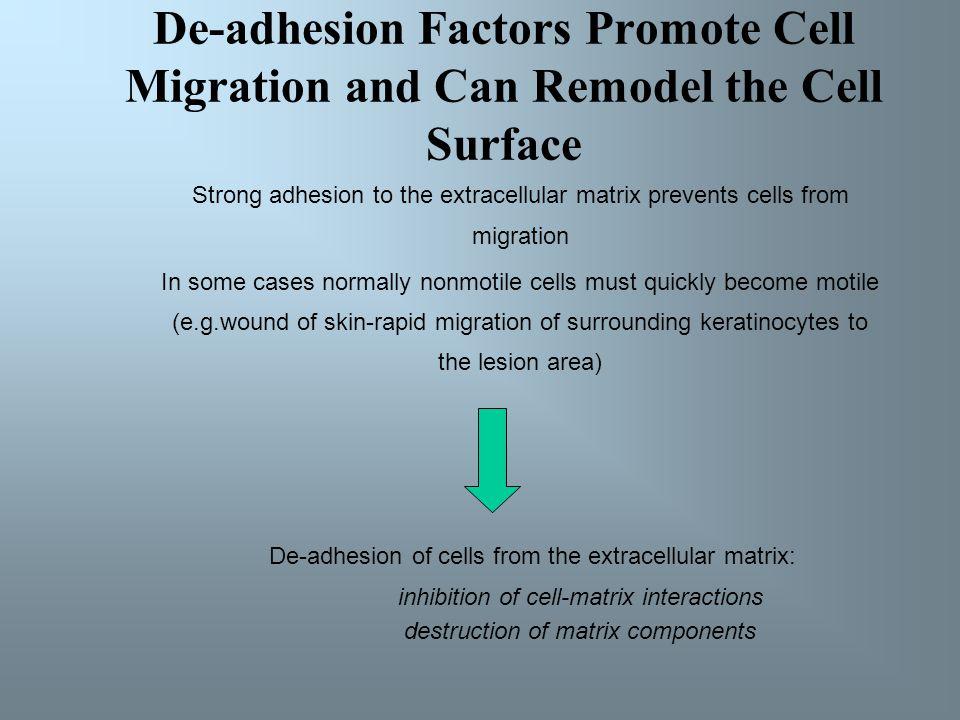 Celle – matriksadhesjon reguleres av endringer i aktivitet og antall integriner Plater, de små cellefragmentene som sirkulerer med blodet og som er vi
