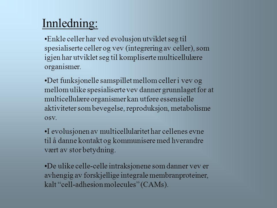 Oversikt over forelesningen: 22.1 Celle-celle Adhesjon og Kommunikasjon 22.2 Celle-Matrix Adhesjon 22.3 Kollagen: Fiber Proteiner i Matrix 22.4 Ikke-k