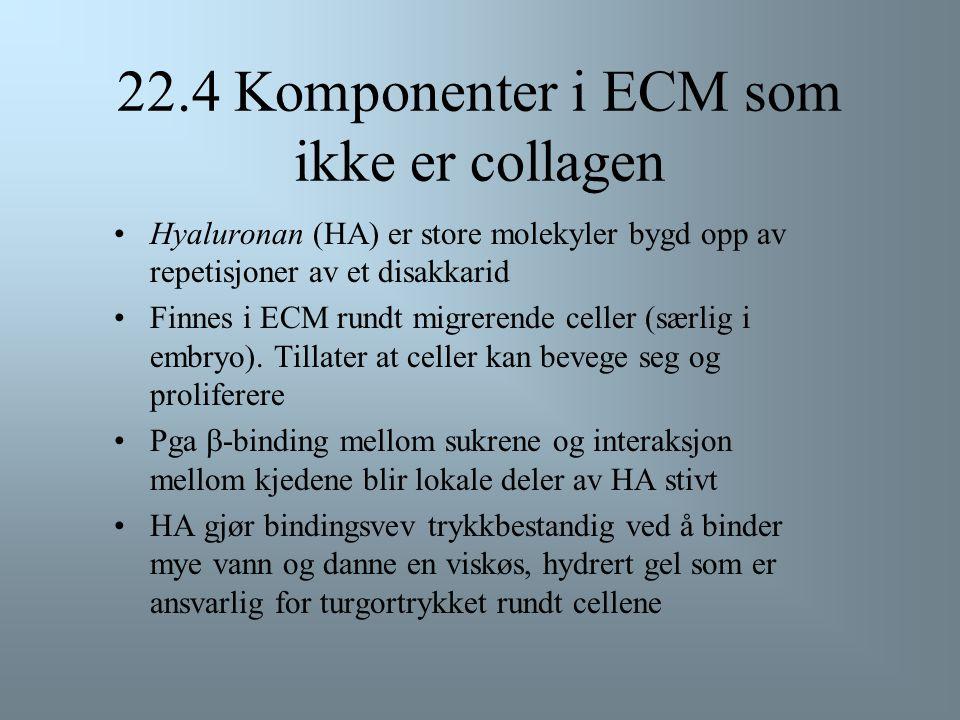 22.4 Komponenter i ECM som ikke er collagen Proteoglycaner finnes i ECM.... –f.eks. Aggrecan, en ansamling av proteoglycaner, vanlig i brusk...og på c