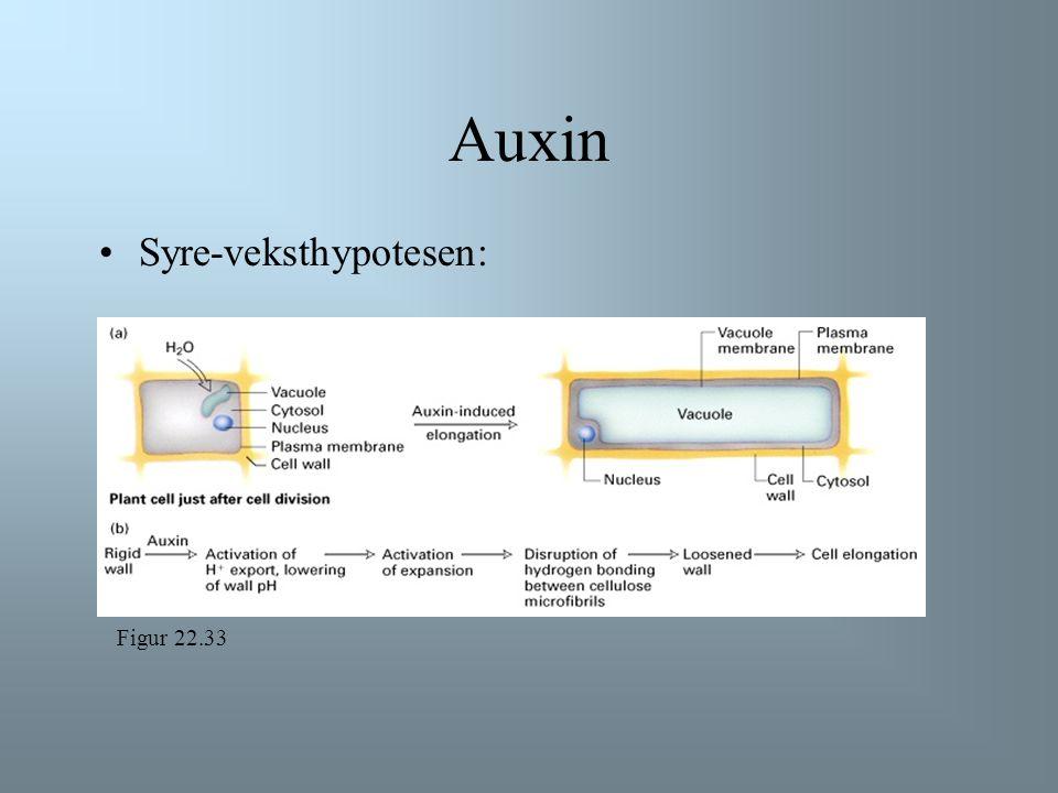 Auxin et plantehormon signaliserer celleutvidelse plantecellen øker raskt i størrelse i det vakuolen tar opp vann cytosol og plasmamembran presses mot