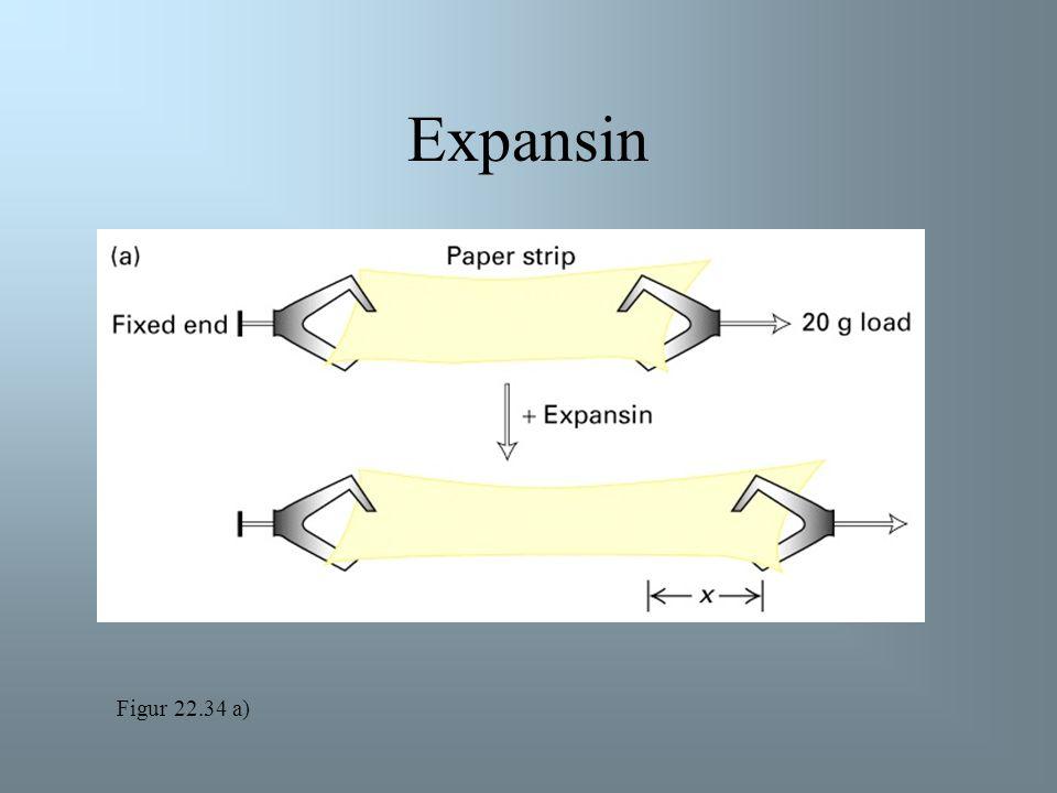 Auxin Syre-veksthypotesen: Figur 22.33
