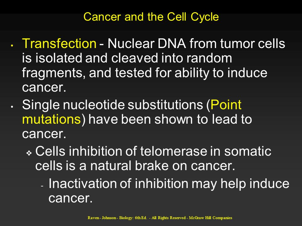 Cancer and the Cell Cycle Transfection - Nuclear DNA from tumor cells is isolated and cleaved into random fragments, and tested for ability to induce cancer.
