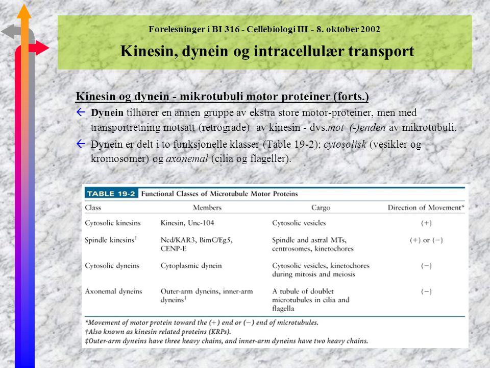 Forelesninger i BI 316 - Cellebiologi III - 8. oktober 2002 Kinesin, dynein og intracellulær transport Kinesin og dynein - mikrotubuli motor proteiner
