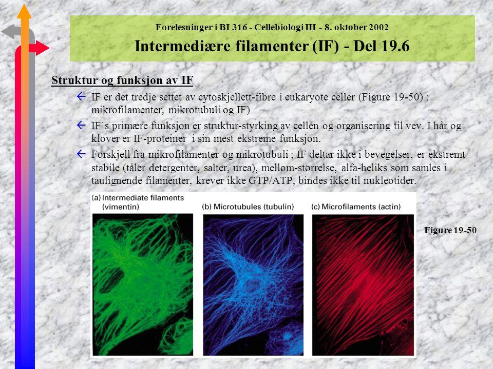 Forelesninger i BI 316 - Cellebiologi III - 8. oktober 2002 Mikrotubuli - dynamikk og motorproteiner i mitose (forts) Plantecellevegg I planteceller d