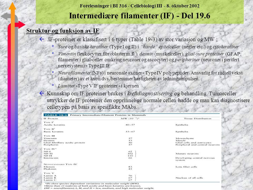 Forelesninger i BI 316 - Cellebiologi III - 8. oktober 2002 Intermediære filamenter (IF) - Del 19.6 Struktur og funksjon av IF ßIF er det tredje sette