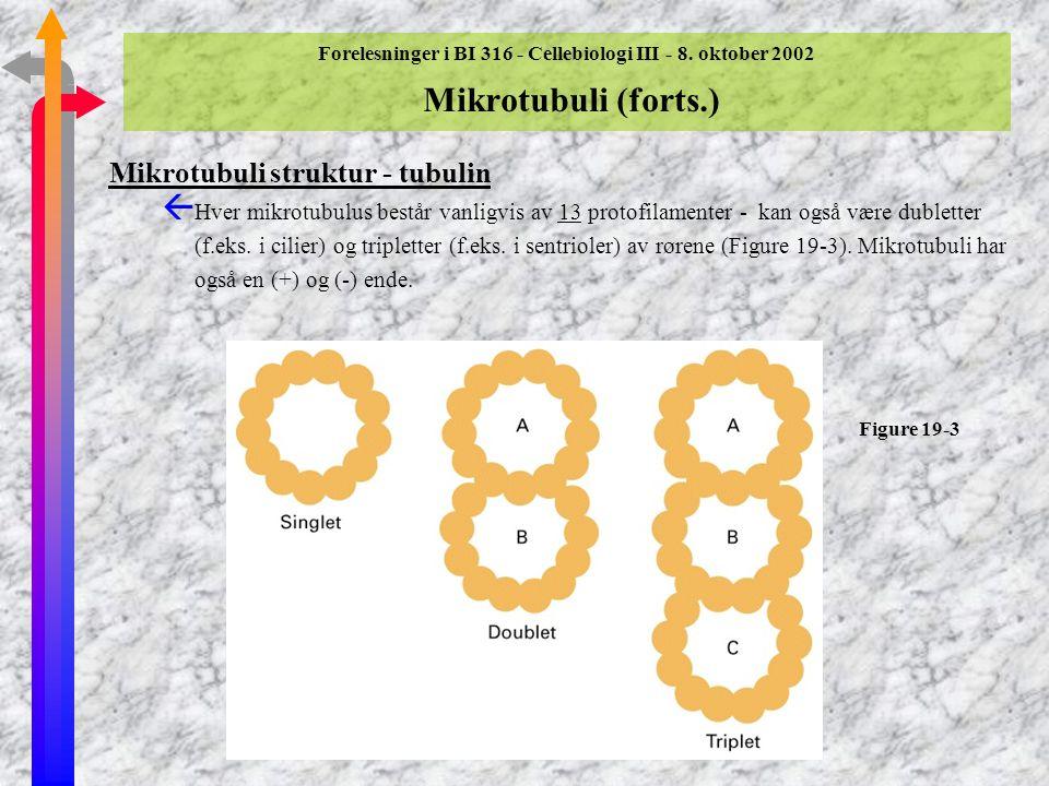Forelesninger i BI 316 - Cellebiologi III - 8. oktober 2002 Mikrotubuli Mikrotubuli struktur - tubulin ß Mikrotubuli er en polymer av globulære tubuli