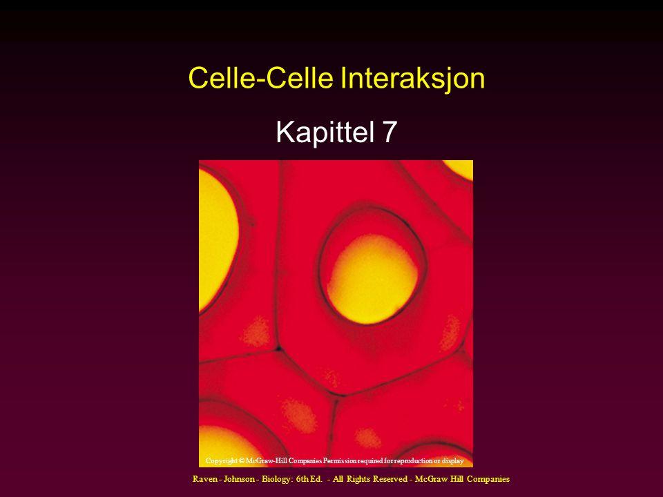 Raven - Johnson - Biology: 6th Ed. - All Rights Reserved - McGraw Hill Companies Celle-Celle Interaksjon Kapittel 7 Copyright © McGraw-Hill Companies