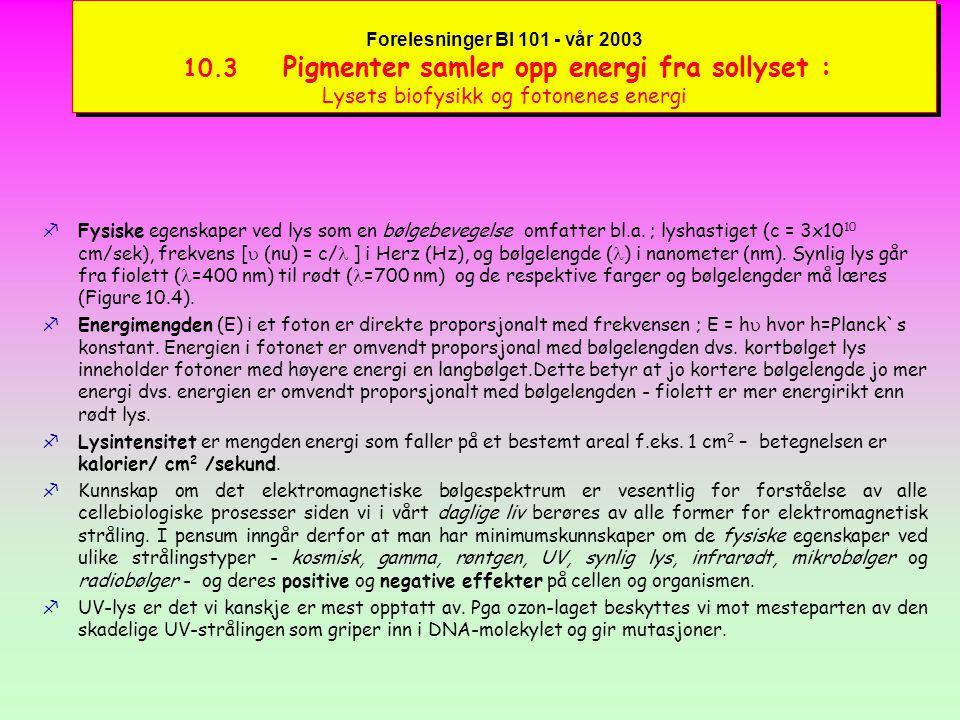Forelesninger BI 101 - vår 2003 10.3 Pigmenter samler opp energi fra sollyset : Lysets biofysikk og fotonenes energi kLysets fysiske karakter som en bølgebevegelse ble klarlagt av tyskeren Heinrich Hertz som eksperimentelt kunne vise at radiobølger eksisterte (se boken).