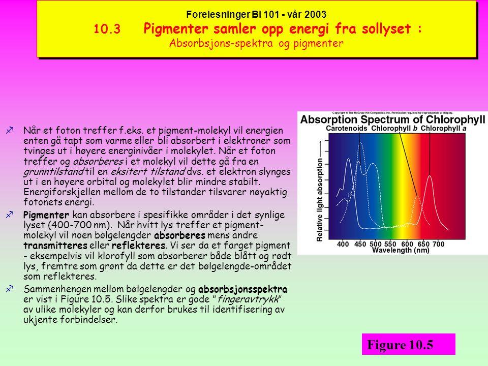 Forelesninger BI 101 - vår 2003 10.3 Pigmenter samler opp energi fra sollyset : Lysets biofysikk og fotonenes energi fFysiske egenskaper ved lys som en bølgebevegelse omfatter bl.a.