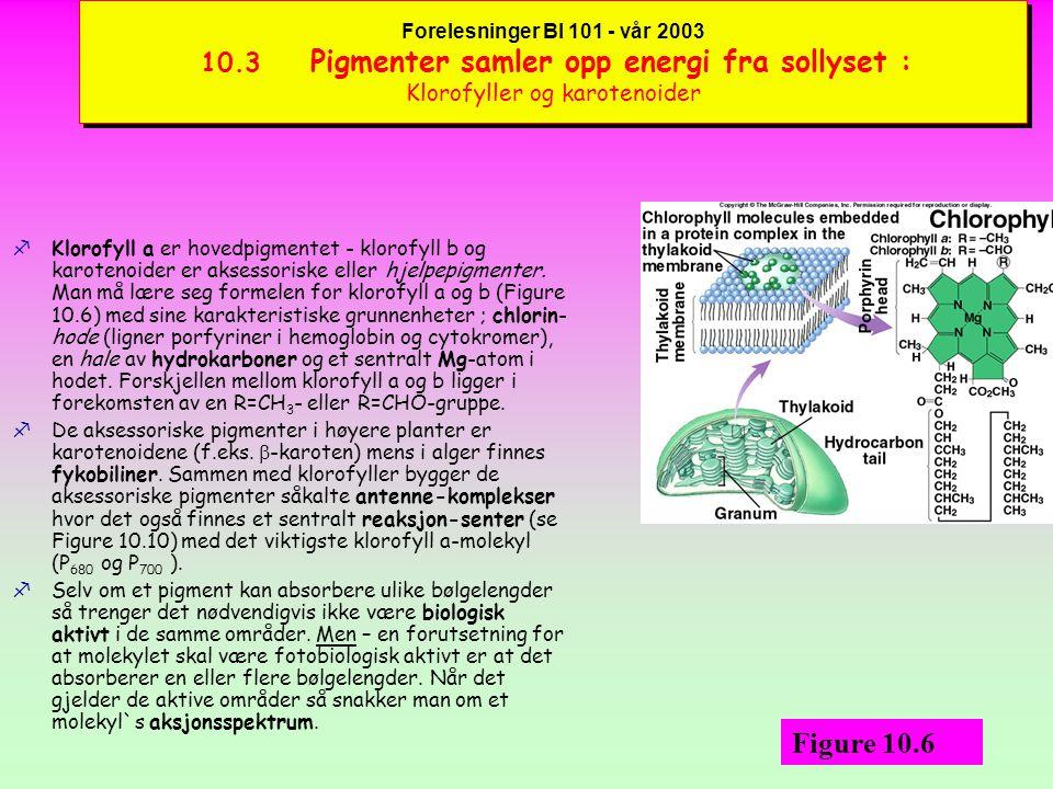 Forelesninger BI 101 - vår 2003 10.3 Pigmenter samler opp energi fra sollyset : Absorbsjons-spektra og pigmenter fNår et foton treffer f.eks.